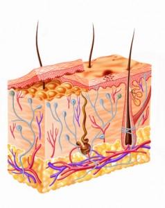 Bild: Biotin im Hautgewebe