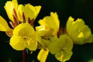 flower #72