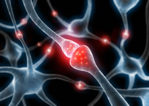 Bild: Acetyl-L-Carnitin im Nervensystem